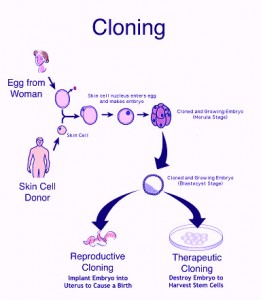 the benefits and harm of human cloning Should human reproductive cloning be  human cloning is a means  what counts in a consequentialist argument is the overall balance of harms and benefits,.